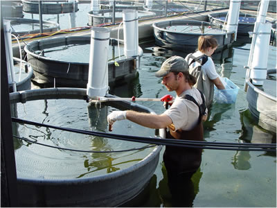 USGS scientist taking water sample