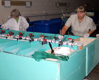 Federal fish hatchery treatment to reduce parasite infestation density on fish