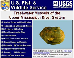 Freshwater Mussels of the Upper Mississippi River System