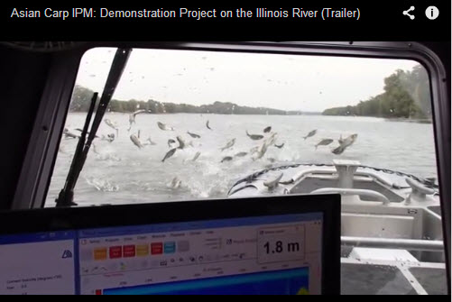 Asian Carp IPM: Demonstration Project on the Illinois River
