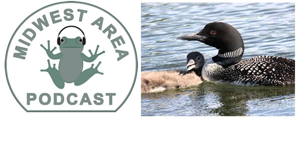 Podcast:Loon
