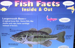 learning lab available at umesc fish facts 300x194