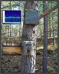 Automated digital sound recorder and camera installed next to a northern Wisconsin wetland. Courtesy of the U.S. Geological Survey.