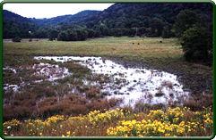 Natural wetland (Photo by Melinda Knutson)